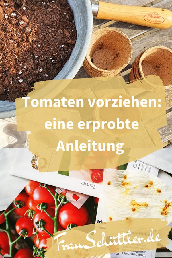 Tomaten vorziehen: Eine erprobte Anleitung