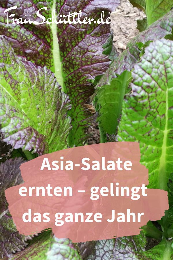 Asia-Salate säen und ernten