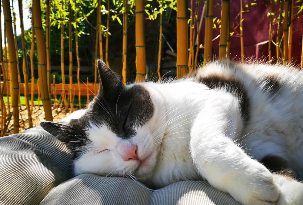 Corona-Sommer: Die Katze genießt die Zeit mit der ganzen Familie.