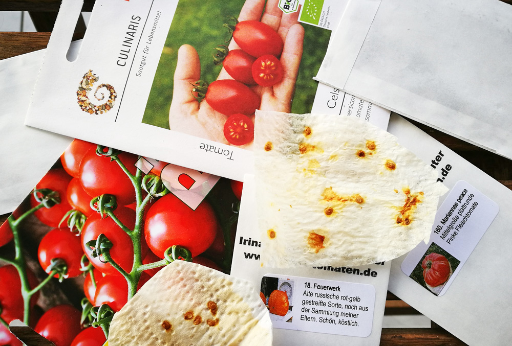 Ein schönes Projekt im Corona-Frühling 2020: Tomaten selber ziehen.