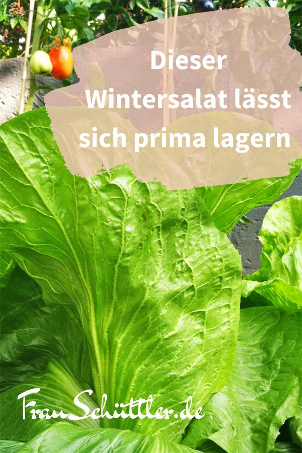 Wintersalat anbauen: Dieser Wintersalat lässt sich prima lagern